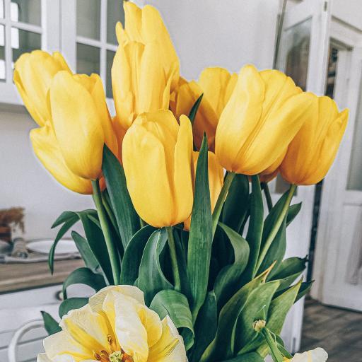 郁金香 鮮花 花束