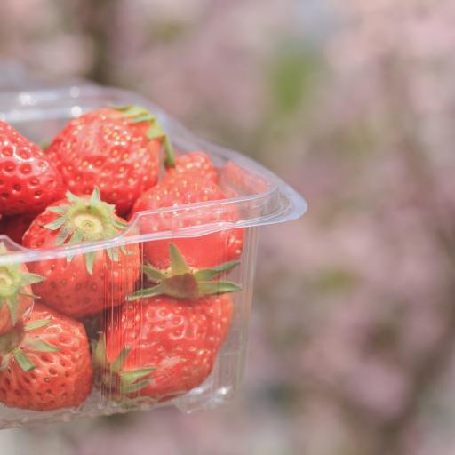 草莓 水果 果實 紅色