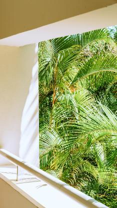 窗台 棕榈树 翠绿 生机