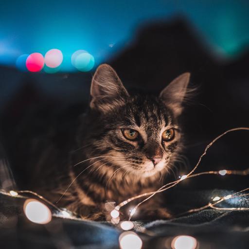猫咪 宠物 彩灯  花猫