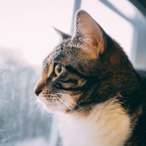 宠物 猫咪 喵星人 侧脸