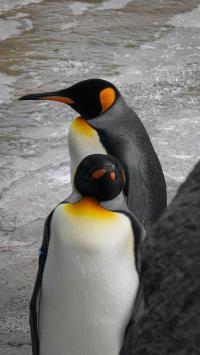 企鹅 可爱 海水 海滩 海浪
