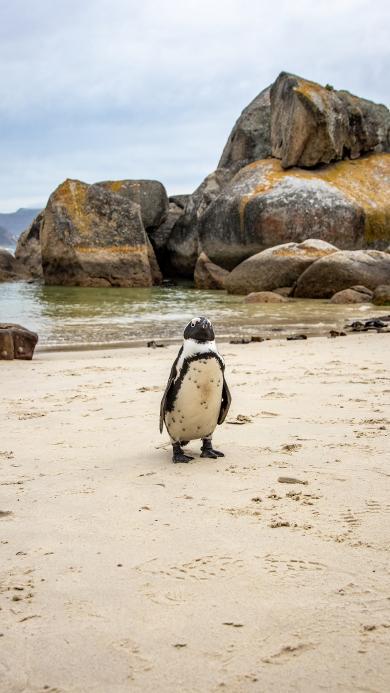 企鹅 海边 沙滩 海岸 可爱
