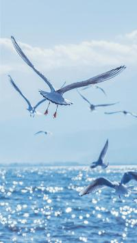 海鸥 海洋 大海 海面 蓝色 鸟 飞翔 翅膀