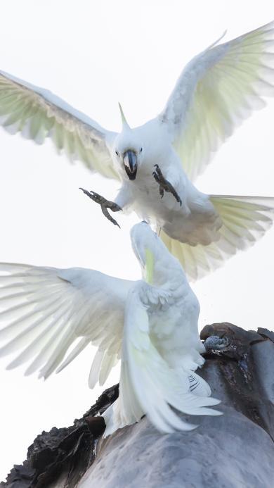 鸟 鹦鹉 飞鸟 斗争