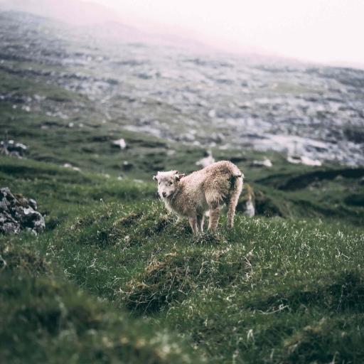 郊外 山峰 草地 小羊羔