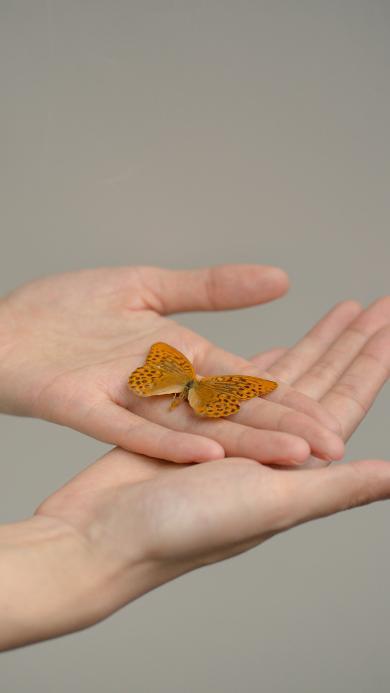 蝴蝶 昆虫 双手 翅膀