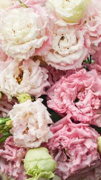 鲜花 花朵 盛开 花瓣