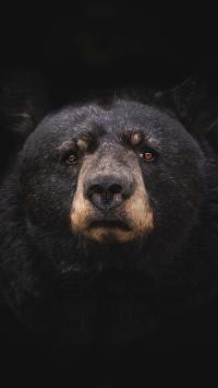 黑熊 狗熊 毛发 庞大