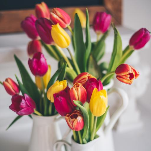 鲜花 郁金香 枝叶 插花