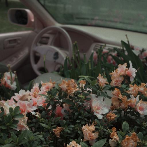 鮮花 盛開 枝葉 汽車