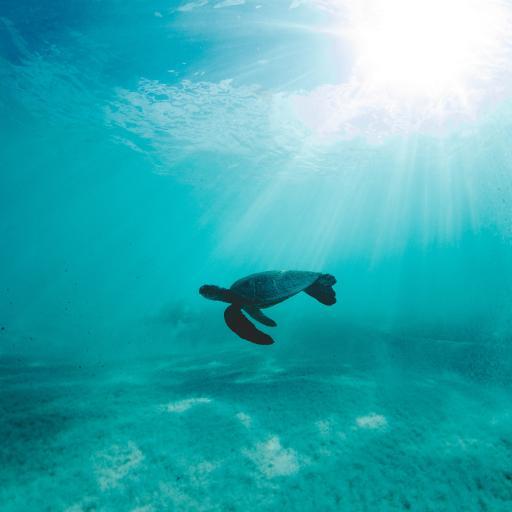 海龜 大海 海洋 游動