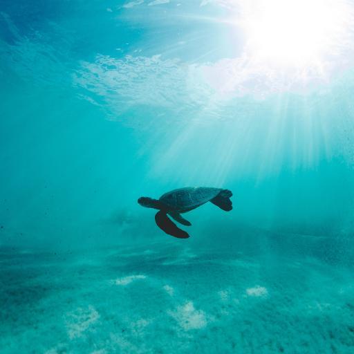 海龟 大海 海洋 游动