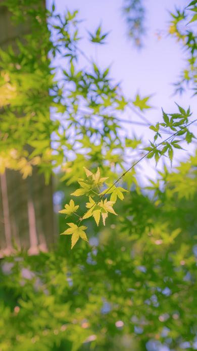 葉子 綠色 枝葉 植被