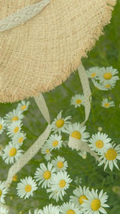 菊花 鮮花 草坪 草帽 綠色