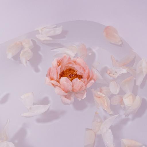 鲜花 花瓣 漂浮 浴缸 水