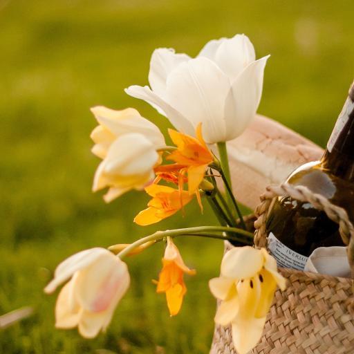 花束 鮮花 草地 編織籃