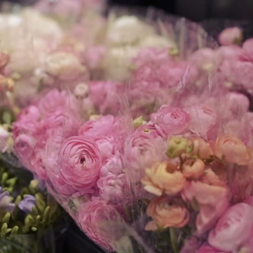 花毛茛 鮮花 盛開 花束 粉色
