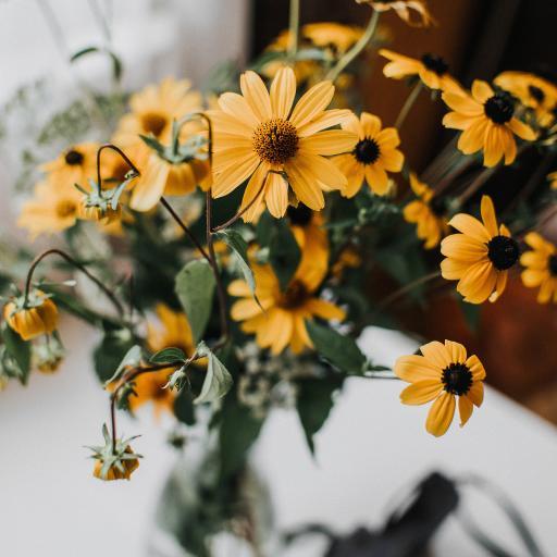 菊花 小花 花朵 雏菊