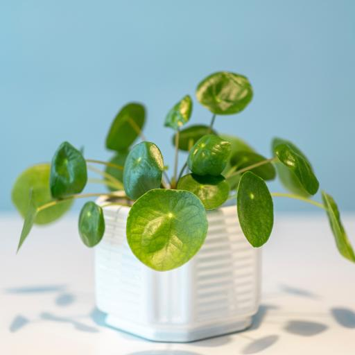 绿植 盆栽 绿植 枝叶