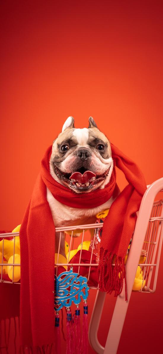 法斗 圍巾 紅色 犬 汪星人 狗 寵物