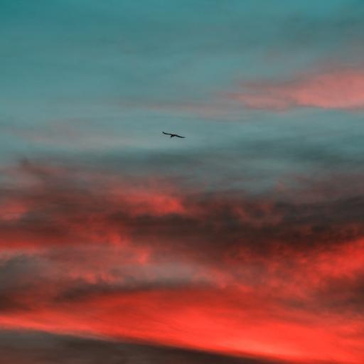 天空 漸變 云海 飛鳥