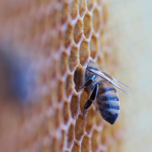 蜂巢 蜜蜂 采蜜 昆蟲