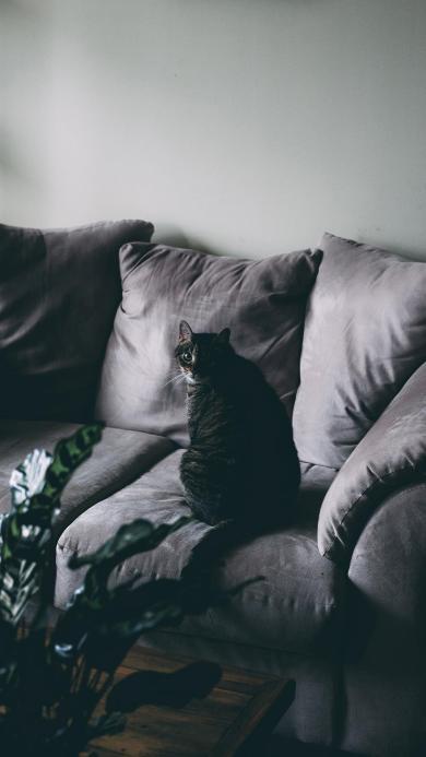 猫咪 喵星人 沙发 回眸 宠物