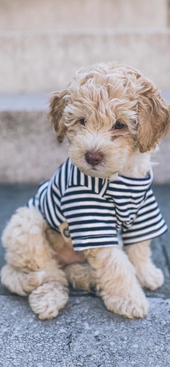 寵物 小狗 衣服 可愛