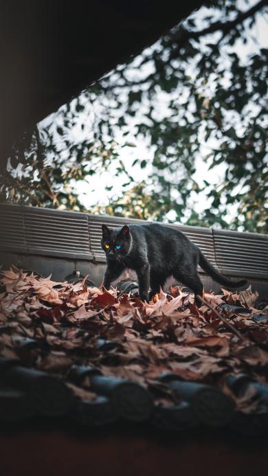 落叶 猫咪 黑猫 喵星人
