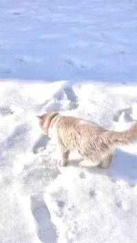 猫咪 喵星人 雪地 宠物 白色