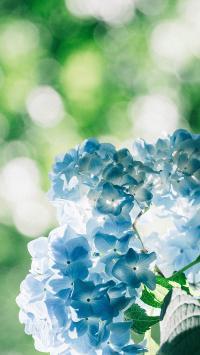 绣球花 鲜花 花束 花簇