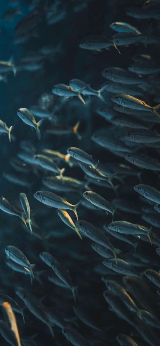 魚群 海洋生物 種群 密集