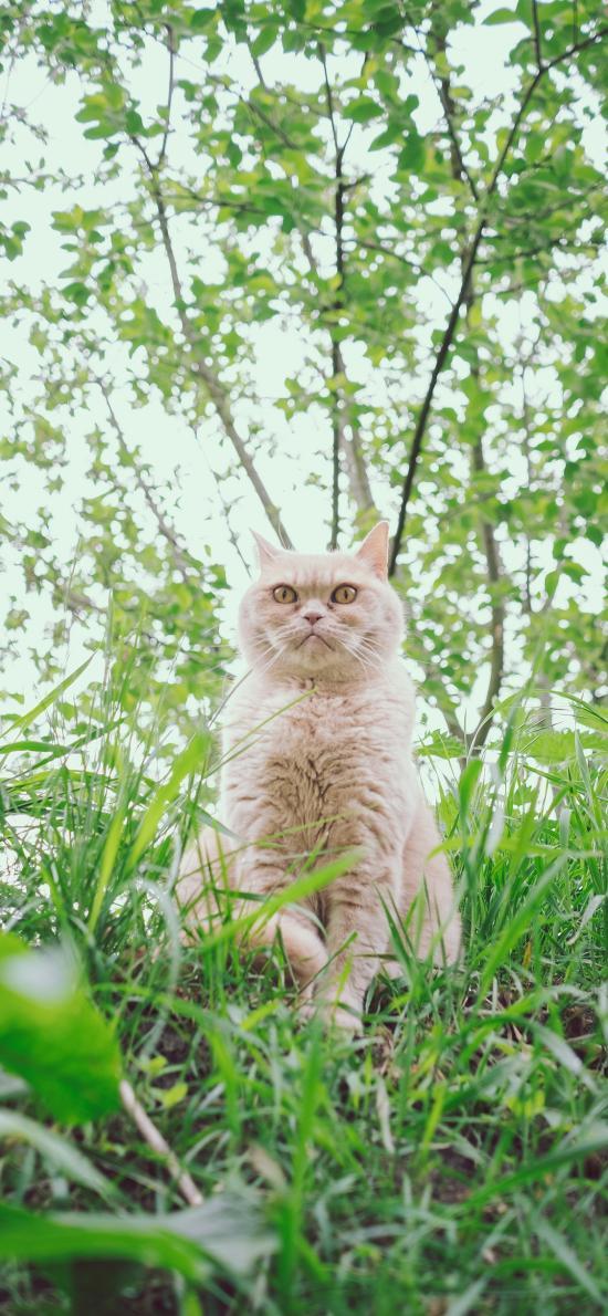 草地 樹林 貓咪 威嚴
