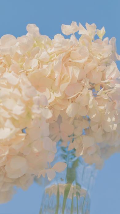 绣球花 鲜花 插花 盛开
