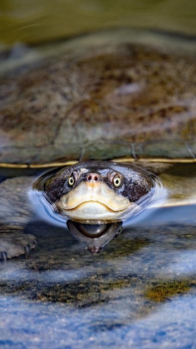 池塘 甲鱼 龟类 两栖