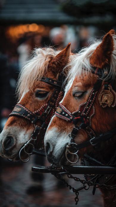 马匹 驹 鬃毛 畜牧 牲畜 绳索