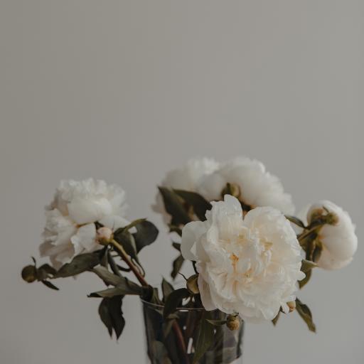 鲜花 花朵 盛开 插花