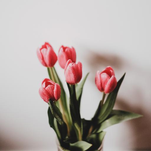 郁金香 鲜花 花束 枝叶 花瓶