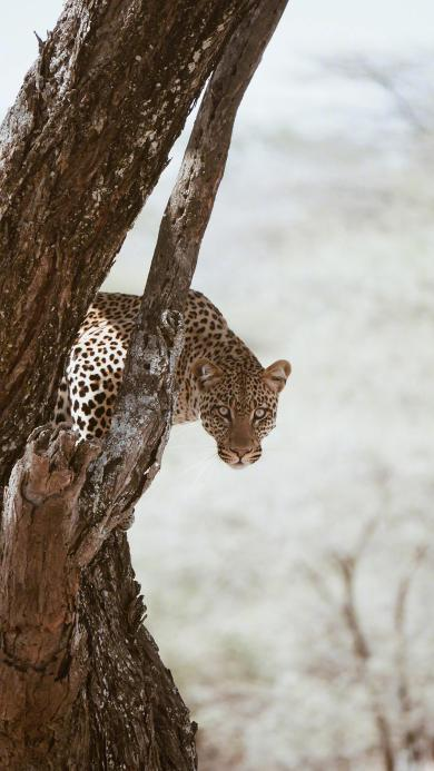 猎豹 猛兽 凶猛 斑纹 树干