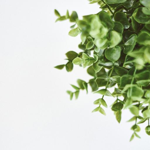 绿植 枝叶 树叶 观赏
