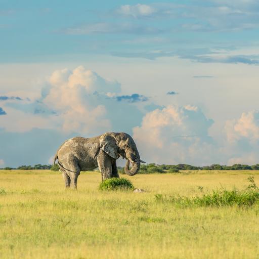 大象 野外 草地 草原 天空
