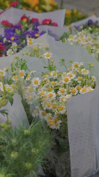 菊花 花束 花艺 鲜花 枝叶