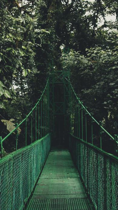 索桥 路 绿色 植物 森林