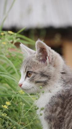 猫咪 宠物 草地 花圃