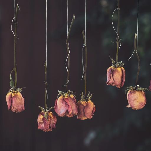 玫瑰花 粉色 悬挂 干花