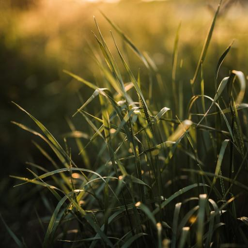 郊外 草地 绿草 生机
