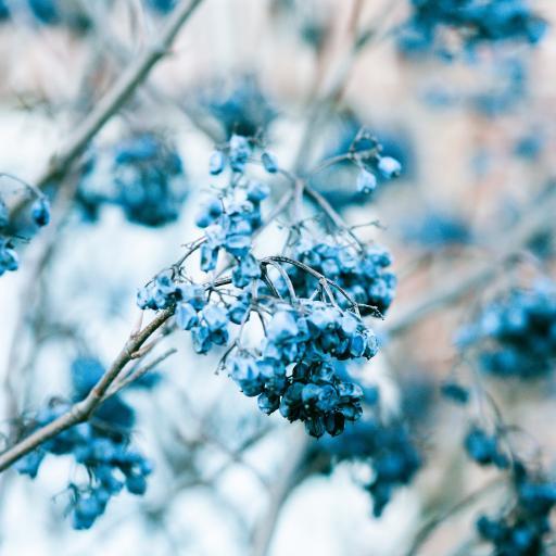 树木 蓝色 鲜花