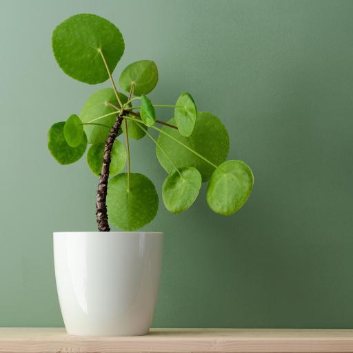 绿植 盆栽 种植 绿化