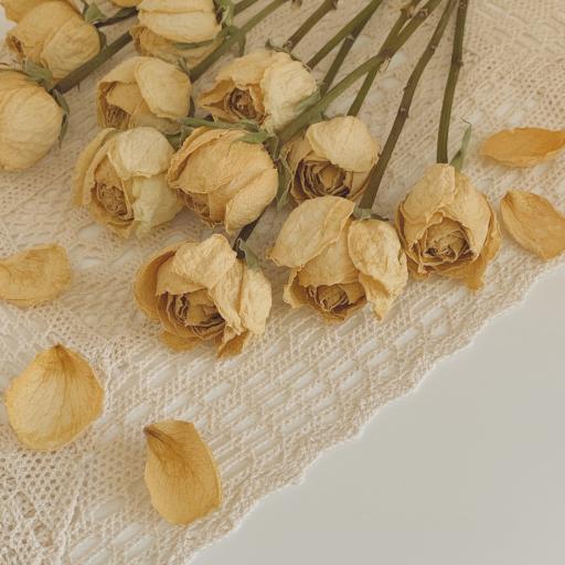 玫瑰 干花 黄色 花瓣